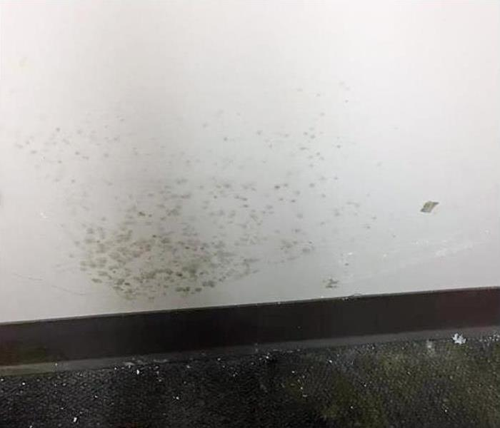 Commercial Mold Damage In Osprey