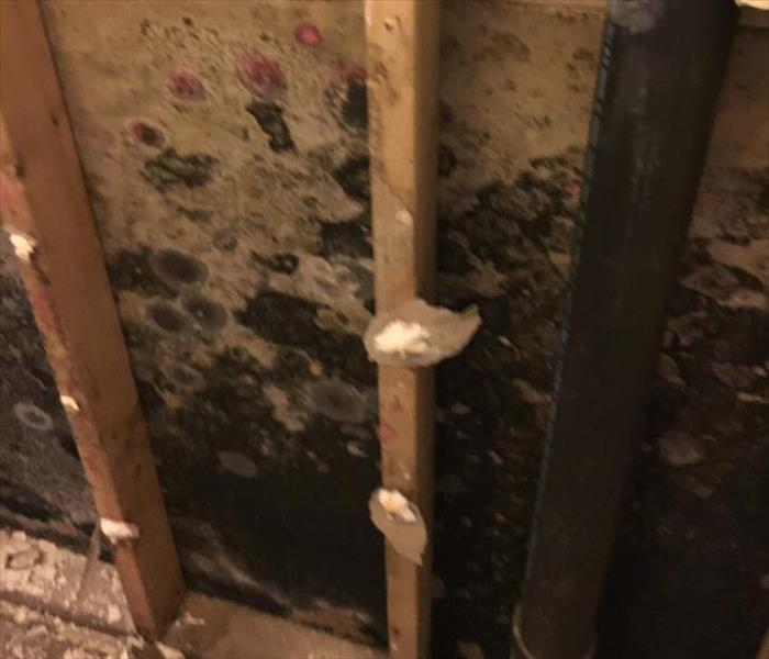 Sarasota Mold Damaged Property