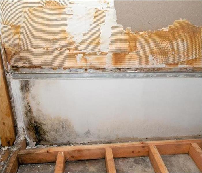 Mold Remediation Mold Damage Experts In Siesta Key Explain Microbial Remediation In Laundry Rooms