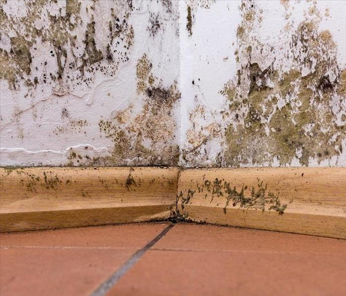 Mold Remediation Mold Damage Mitigation Facts That Every Siesta Key Resident Should Know