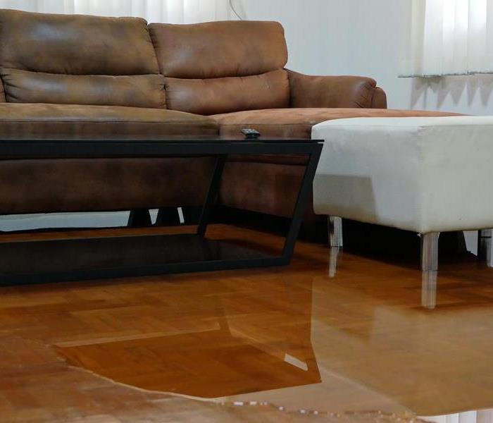 water spill on wood floor underneath brown couch in living room